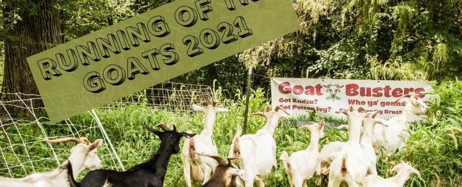 Running of the Goats 2021